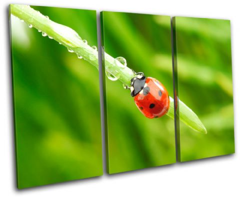 Ladybird Wildlife Animals - 13-1143(00B)-TR32-LO